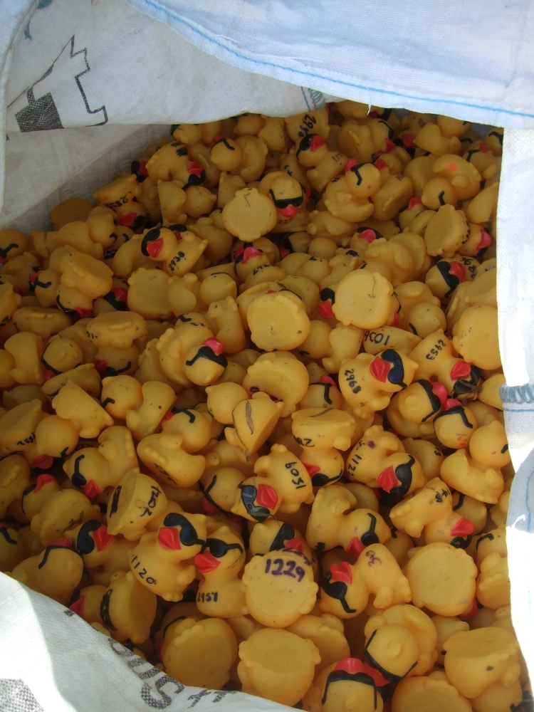 Bag full of Ducks