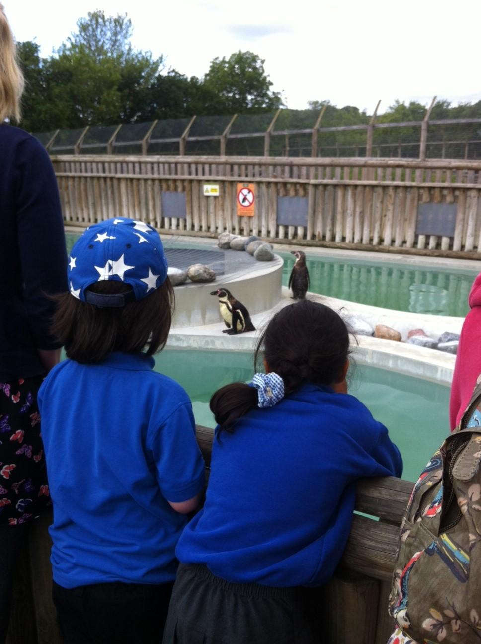 Wingham Zoo