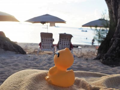 Duck travels: Barbados-duck