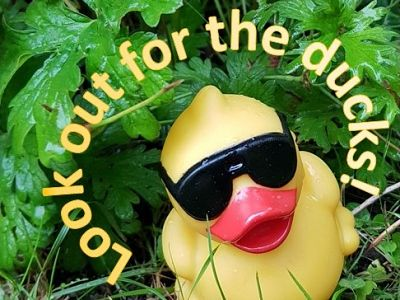 Duck race 2018: Ducks 'for sale'!